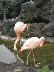 200988safari_park_0241
