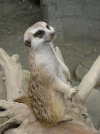 200988safari_park_0361
