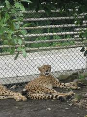 200988safari_park_0451
