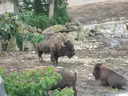 200988safari_park_0491