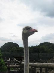 200988safari_park_0521