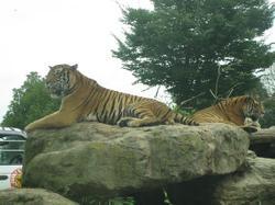 200988safari_park_0701