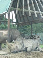 200988safari_park_0871
