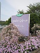 Img_11651