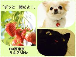 Img_6473_3